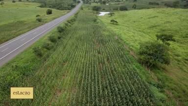 Produtores de hortaliças usam criatividade para driblar crise provocada pela pandemia - Produtores de hortaliças usam criatividade para driblar crise provocada pela pandemia
