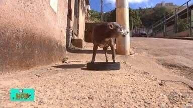 TV Bicho: grupo solidário inclui ração de cachorro em cestas básicas para ajudar pets - Ação desenvolvida pelo grupo SOS JF auxilia cerca de 130 famílias e também envia alimentos para alimentar os animais de estimação.