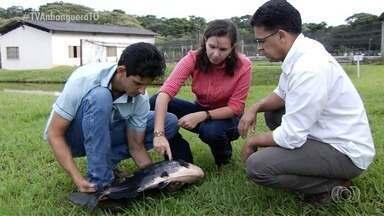 Pesquisadores da UFG são referência no estudo do comportamento de peixes - Pesquisadores da UFG são referência no estudo do comportamento de peixes