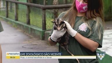 Zoológico de São Vicente faz lives sobre animais - Próxima live falará sobre um saruê que está em recuperação no parque.