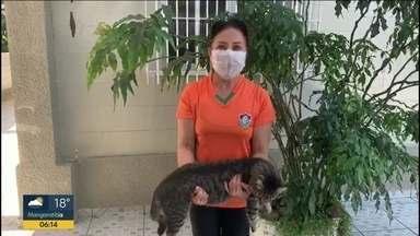 Você na quarentena: Médica adota gato - Dinair, médica de Nilópolis, adotou um gato e faz ginástica com ele.