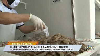 Com fim do defeso, pesca do camarão é liberada no litoral - Produto corresponde a até 80% das vendas no entreposto de Caraguá