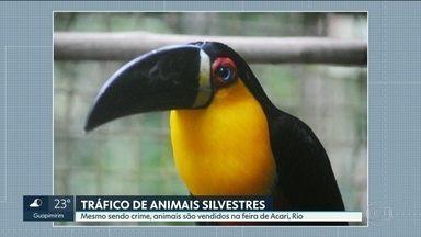 Animais silvestres são encontrados facilmente nas feiras livres do Rio - Traficantes de animais silvestres continuam agindo à luz do dia, em feiras livres como a de Acari ou de Caxias sem a devida repressão do poder público.
