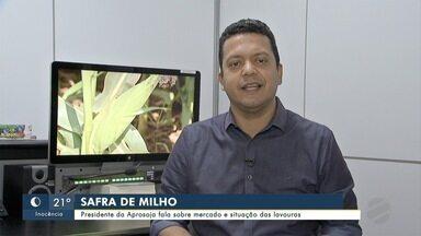 Presidente da Aprosoja fala sobre mercado do milho e situação das lavouras - Em Mato Grosso do Sul.