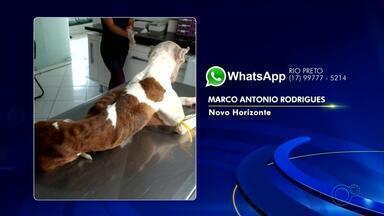 Cachorro é agredido com corda e puxado por idoso no meio da rua em Urupês - Um vídeo que circula nas redes sociais mostra um idoso agredindo e puxando um cachorro com uma corda no meio da rua, em Urupês (SP).
