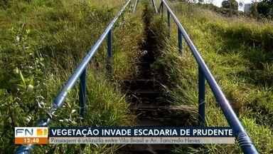 Vegetação invade escadaria em Presidente Prudente - Passagem é utilizada entre Vila Brasil e Avenida Tancredo Neves.