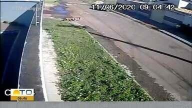 Cadelinha morre após ser atacada por pitbulls em Palmas; veja vídeo - Cadelinha morre após ser atacada por pitbulls em Palmas; veja vídeo