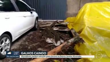 Telespectadores cobram solução para problemas em suas regiões - Moradores do Bairro Tupi, em Belo Horizonte, mostram situação de água jorrando no meio da rua. No Jardim Alvorada, o problema é com uma árvore.