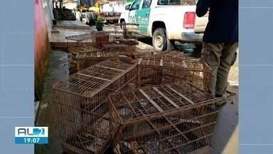 Ação conjunta resgata centenas de pássaros em Murici - Animais foram encontrados numa área de proteção ambiental.