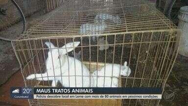 Polícia Ambiental resgata 85 animais em Leme e aplica multa de R$ 255 mil por maus-tratos - Entre os bichos encontrados no local havia cães, coelhos e galos.