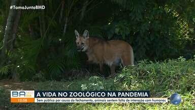Veja como está rotina do zoológico de Salvador, fechado por causa da pandemia - Os animais e as áreas verdes recebem cuidados especiais enquanto o espaço está sem público.