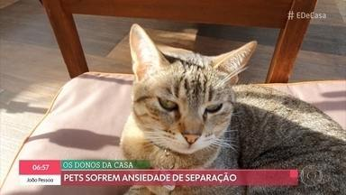 Volta à rotina pode provocar ansiedade de separação nos animais - Alexandre Rossi dá dicas para pet não sofrer na ausência do dono