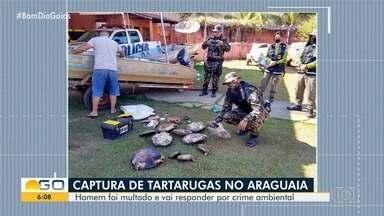 Homem é multado por capturar tartarugas, em Goiás - Segundo policiais, ele estava fazendo 'pesca' pelo Rio Araguaia.