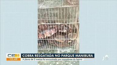 Cobra de dois metros é resgatada no Parque Manibura, em Fortaleza - Saiba mais no g1.com.br/ce
