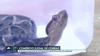 Polícia investiga se estudantes reproduziam cobras em cativeiro - O estudante que foi picado pela naja e os amigos dele podem estar envolvidos com o tráfico de animais silvestres.