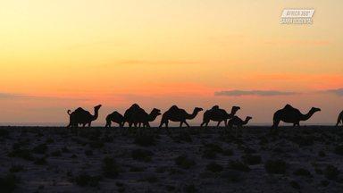 Histórias do Deserto - Os amigos Jatyr e os irmãos se afastam da costa, das ondas, para se perderem um pouco no deserto. Assim, se deparam com uma natureza surpreendentemente bonita e cheia de detalhes.