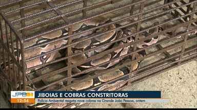Polícia Ambiental resgata cobras na Grande João Pessoa - Nove cobras foram encontradas na cidade no domingo (19).