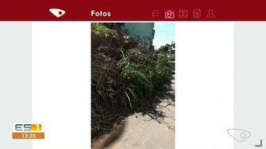 Moradores reclamam de mato e sujeira em rua de Cachoeiro - Veja a reportagem!