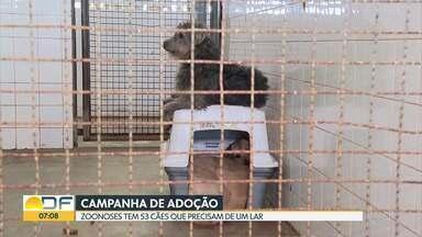 Zoonoses faz campanha para adoção de 53 cães - Eles viviam na casa de uma acumuladora e foram recolhidos pela instituição.