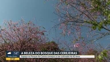 Quadro Verde - A beleza do Bosque das Cerejeiras.