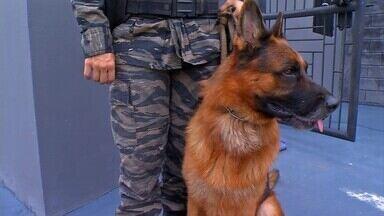 Projeto prevê cães treinados para investigação e resgate no município - .