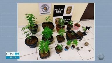 Polícia encontra estufa caseira para cultivo de maconha dentro de guarda-roupas - Flagrante foi em Tarabai.