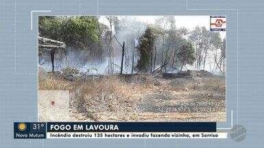 Um incêndio destruiu 135 hectares e invadiu fazenda vizinha em Sorriso - Um incêndio destruiu 135 hectares e invadiu fazenda vizinha em Sorriso