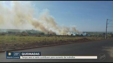 Fogo destrói vegetação de cidades da região de Ribeirão Preto, SP - Tempo seco e vento contribuem para aumento de incêndios.