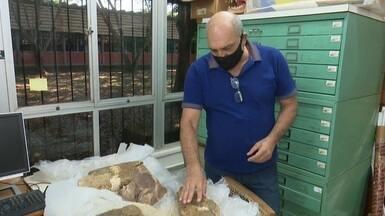 Fósseis de animais pré-históricos são doados a laboratório da Ufac - Fósseis de animais pré-históricos são doados a laboratório da Ufac
