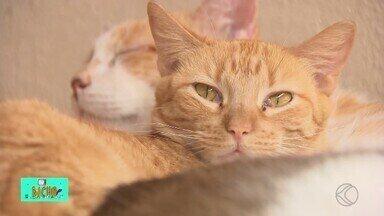 TV Bicho: Projeto em Divinópolis acolhe e faz doações de gatos - Quadro dessa semana mostra projeto no Centro-Oeste de Minas Gerais e também aborda as peculiaridades dos felinos.