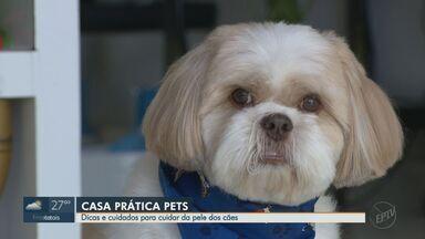 Quadro 'Casa Prática Pets' mostra cuidados com pelo dos cachorros - Cada raça tem um tipo de pele e precisa de atenção.
