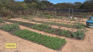 Conheça a caderneta agroecológica - Conheça a caderneta agroecológica.