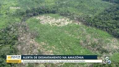WWF faz alerta contra desmatamento na Amazônia - WWF faz alerta contra desmatamento na Amazônia