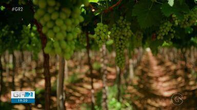 Vendas nas vinícolas da região voltam a crescer após queda no início da pandemia - O Vale do São Francisco é o segundo maior produtor de vinhos e espumantes do Brasil