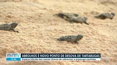 Cientistas se preocupam com preservação de tartarugas híbridas; confira - Elas têm menos chance de sobreviver.