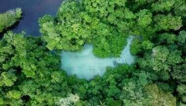 Assista ao Terra da Gente de hoje (05/09) na íntegra - Viagem pela Amazônia em busca do beija-flor-brilho-de-fogo, pescaria com muito aprendizado e diversão pelos rios do noroeste paulista e receita de caldeirada de frutos do mar.
