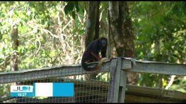 Parque zoobotânico faz programação especial para o Dia da Amazônia, em Marabá - Parque zoobotânico faz programação especial para o Dia da Amazônia, em Marabá