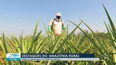 Confira os destaque do 'Amazônia Rural' deste domingo - Programa vai ao ar em todas manhãs de domingo.