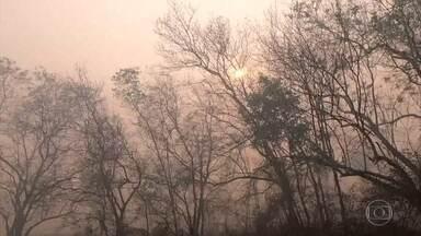 Em Mato Grosso, grande parte dos incêndios no Pantanal foi causada pelo homem - A polícia vai averiguar os dados coletados pelo Corpo de Bombeiros para saber se as queimadas são intencionais ou acidentais. Se intencionais, os responsáveis podem ser presos e levar multa.