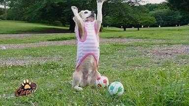 'Cãopeão' mostra cães fazendo os mais variados truques - Confira!