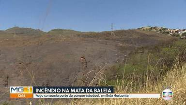 Incêndio consome parte do Parque Estadual da Baleia, na Região Leste de Belo Horizonte - O incêndio durou cerca de 20 horas.