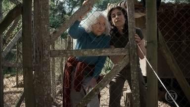 Gilda ajuda Lúcia a capturar uma galinha - Após o almoço, mãe e filha decidem fazer uma trégua