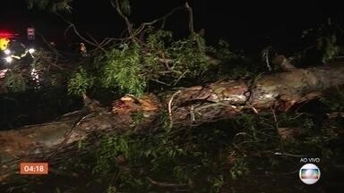 Chuva forte deixa ruas alagadas e provoca queda de árvore em Porto Alegre, RS - Choveu forte em Porto Alegre no início da madrugada.