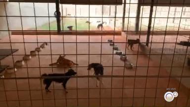 Prefeitura de Votuporanga abre cadastro para castração de cães e gatos - A prefeitura de Votuporanga (SP) abre nesta segunda-feira (14) o cadastro pra quem quiser fazer a castração de cães e gatos de graça.