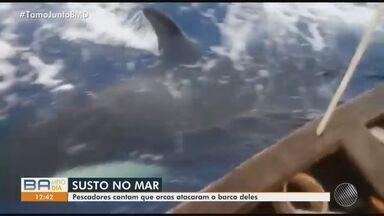 Orcas assustam pescadores na praia de Itacimirim, no litoral norte veja o flagrante - Os animais cercaram o barco onde estavam pai e filho.