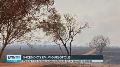 Mais de 4 mil hectares pegaram fogo no fim de semana em Miguelópolis - Foram momentos de tensão e muito medo.