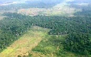 Protestos virtuais denunciam crimes ambientais na Amazônia - Segundo o último levantamento do Inpe, Pacajá (PA) foi o município que mais desmatou a floresta amazônica em julho. Protestos virtuais no portal Globo Amazônia denunciam o crime ambiental na região.