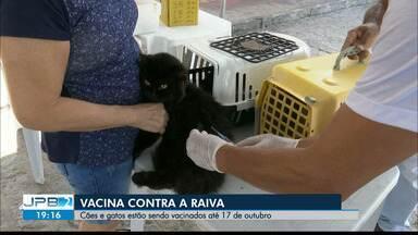 Cães e gatos estão sendo vacinadas contra a raiva até dia 17 de outubro - Campanha de vacinação.