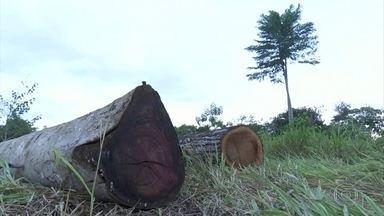 Agosto registra o pior índice de desmatamento na Amazônia dos últimos dez anos - Segundo o Imazon, o Instituto do Homem e Meio Ambiente da Amazônia, a maioria das áreas desmatadas é destinada à pecuária.