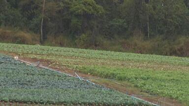 Produtores rurais adaptam a produção durante o clima seco - Apesar do clima chuvoso no início da primavera,os produtores estão cautelosos devido ao aumento previsto da temperatura nos próximos meses.